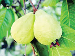 فوائد الجوافة لصحة القلب