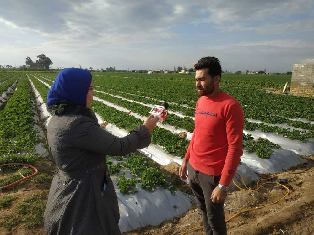 محررة أهل مصر مع مزارعي الفراولة بالبحيرة