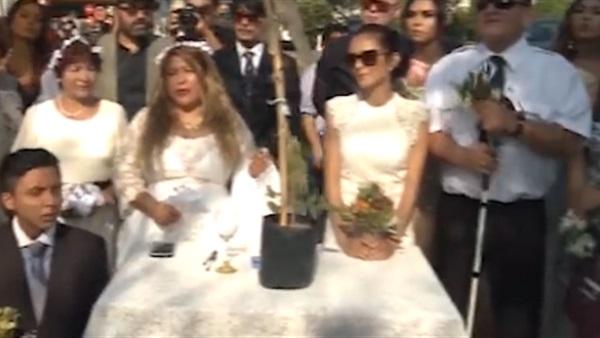d55f3381a أهل مصر: شاهد.. فتيات يتزوجن من أشجار: